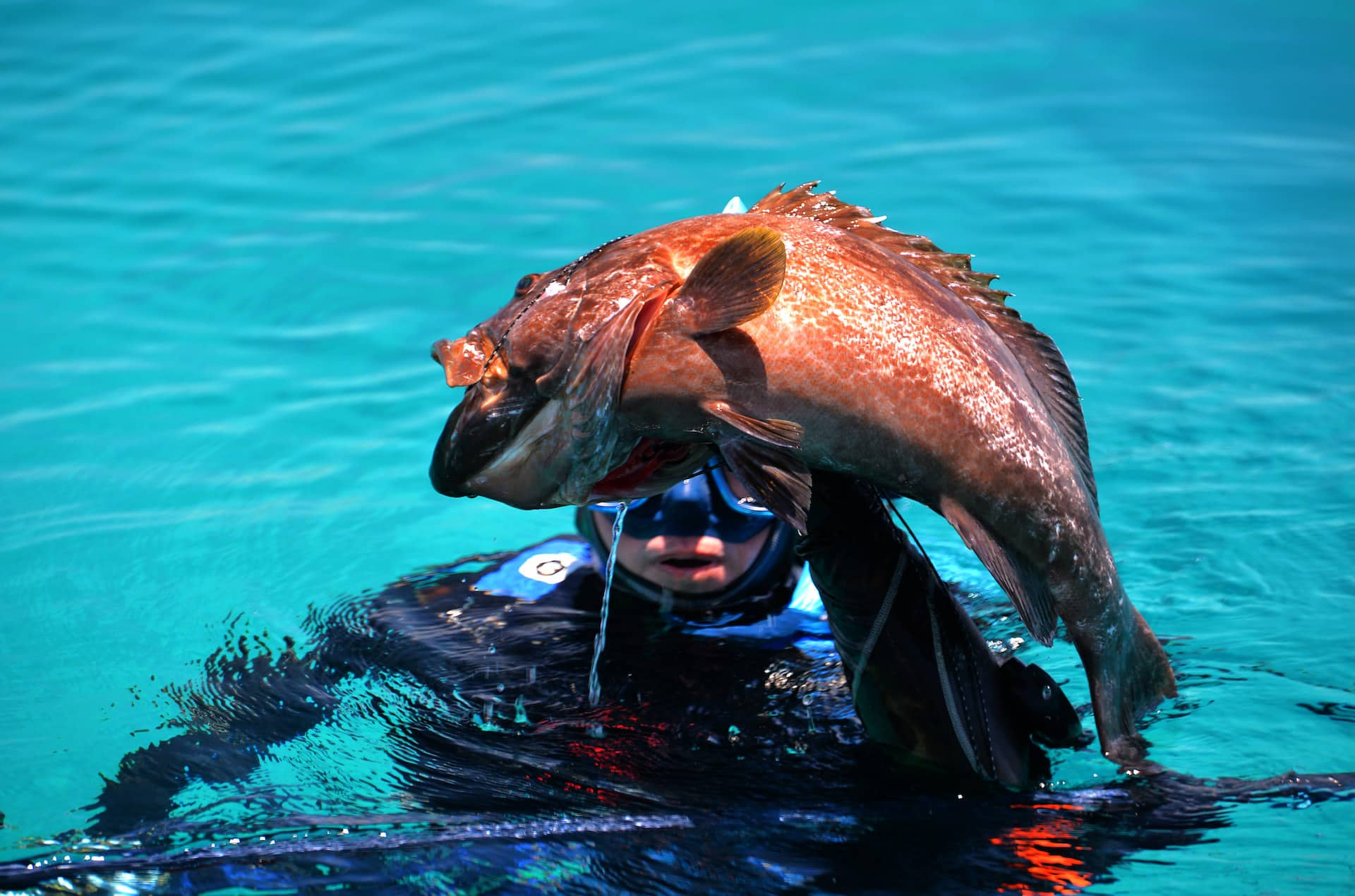 catching a fish after learning spearfishing